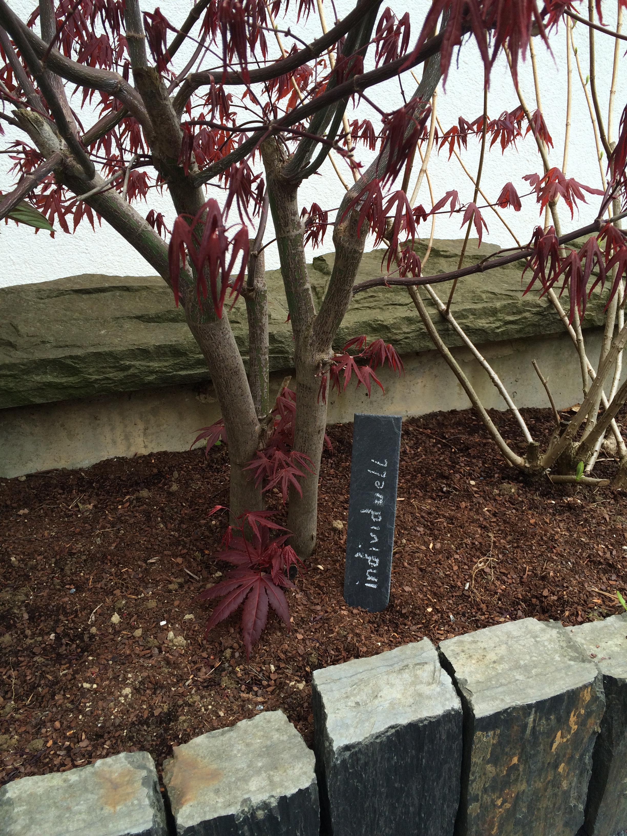 Primero Pflanzenschild mit Spitze, Kräuterschild 5er im Set